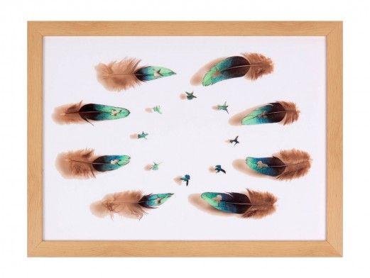 Cuadro plumas